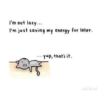 Lazy cat_pic